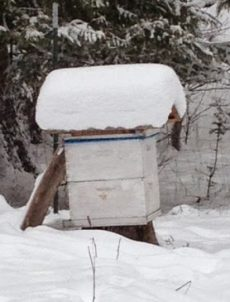 Bee hive in the winter.