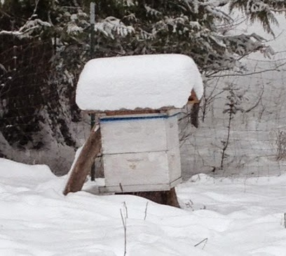 A bee hive stacked with snow on top of the hive.
