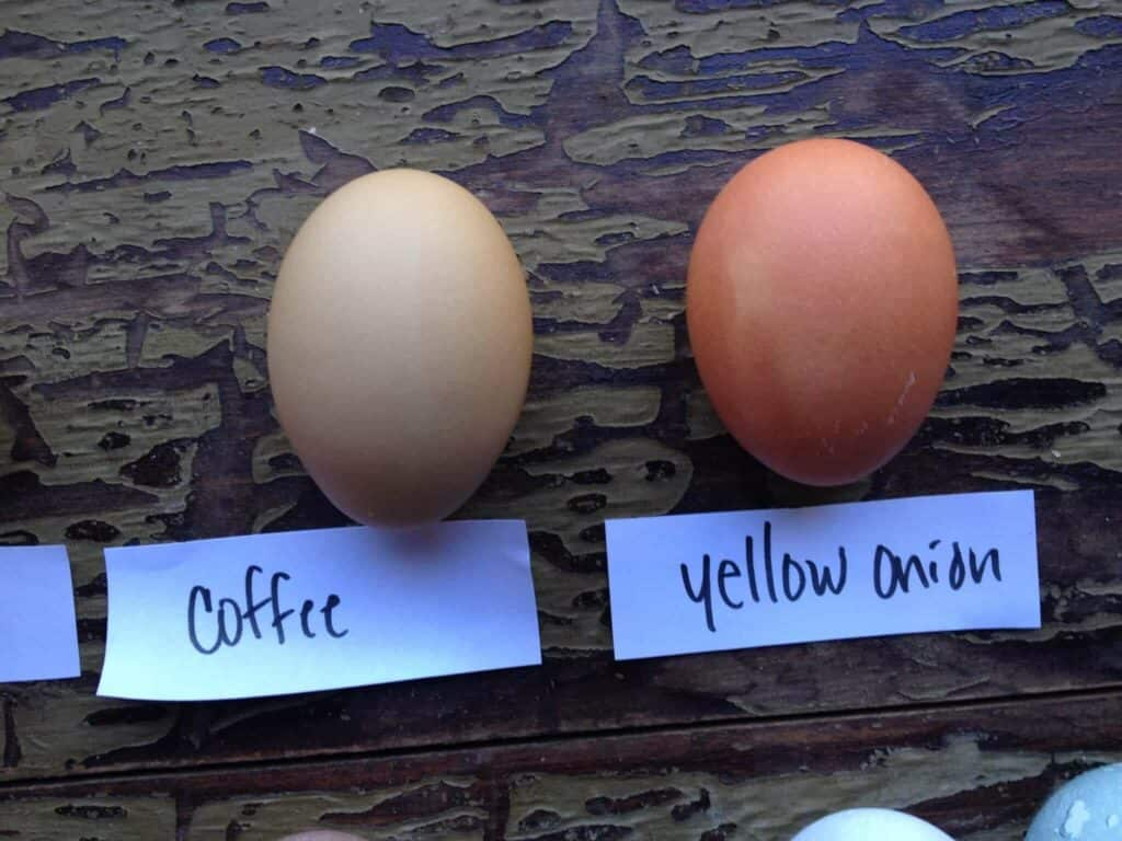 Coffee, Yellow Onion Egg Dyes