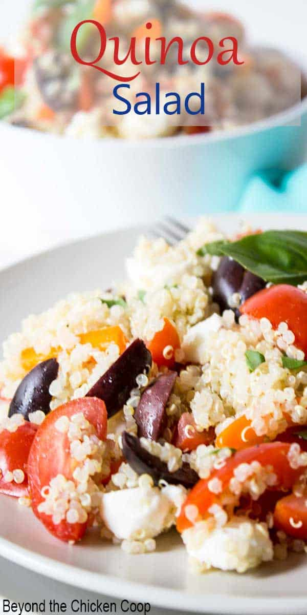 A quinoa salad with fresh tomatoes, olives and mozzarella balls.