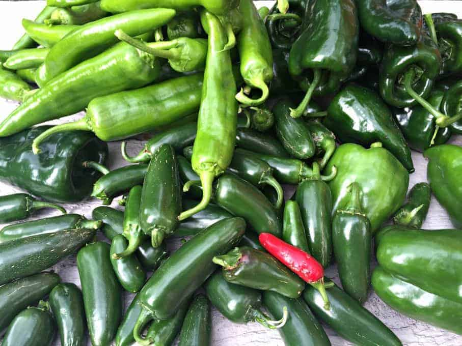 An assortment of green chili peppers and one red jalapeno.