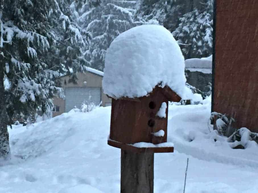Birdhouse covered with snow.