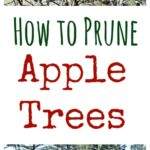 Pruning apple trees is a necessary task. Doing it yourself just makes sense.