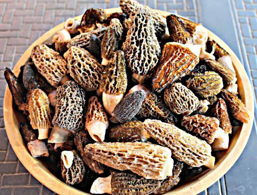 Wild Morel Mushrooms ~ Beyond the Chicken Coop