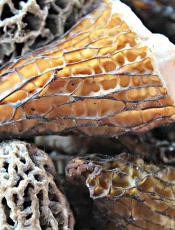 Different colored wild morel mushrooms all piled together.