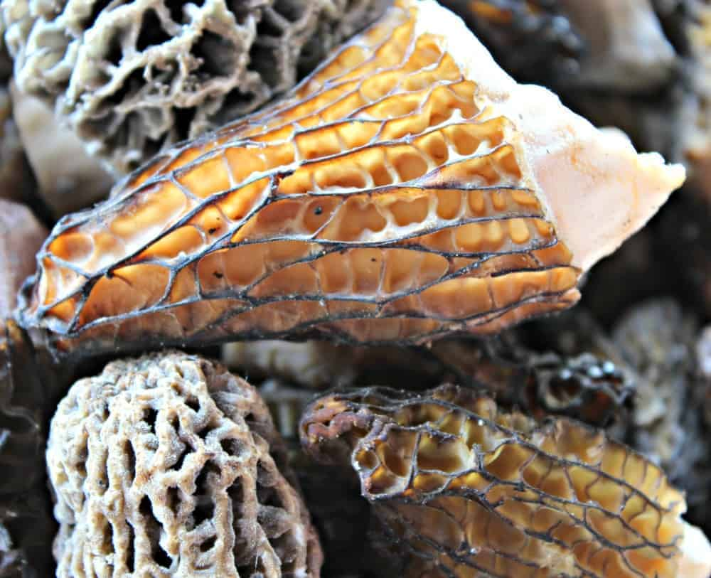 Harvesting Wild Morel Mushrooms ~ Beyond the Chicken Coop