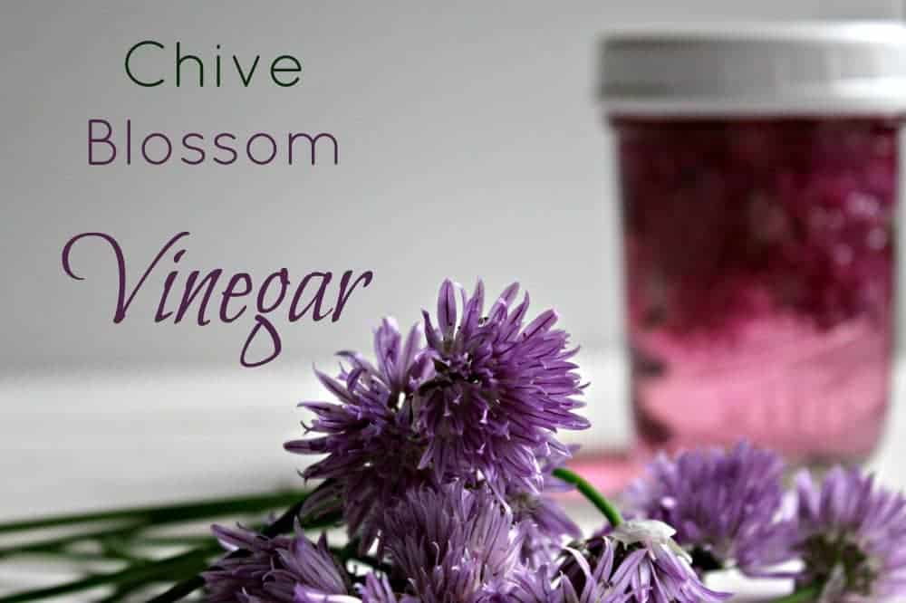 Chive Blossom Vinegar Recipe — Dishmaps