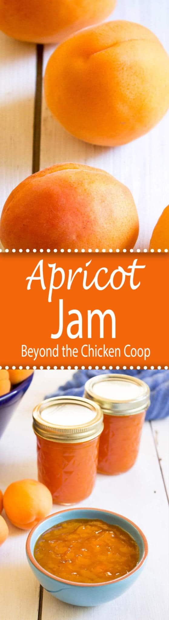 Homemade apricot jam captures the very best flavor of ripe apricots. beyondthechickencoop.com