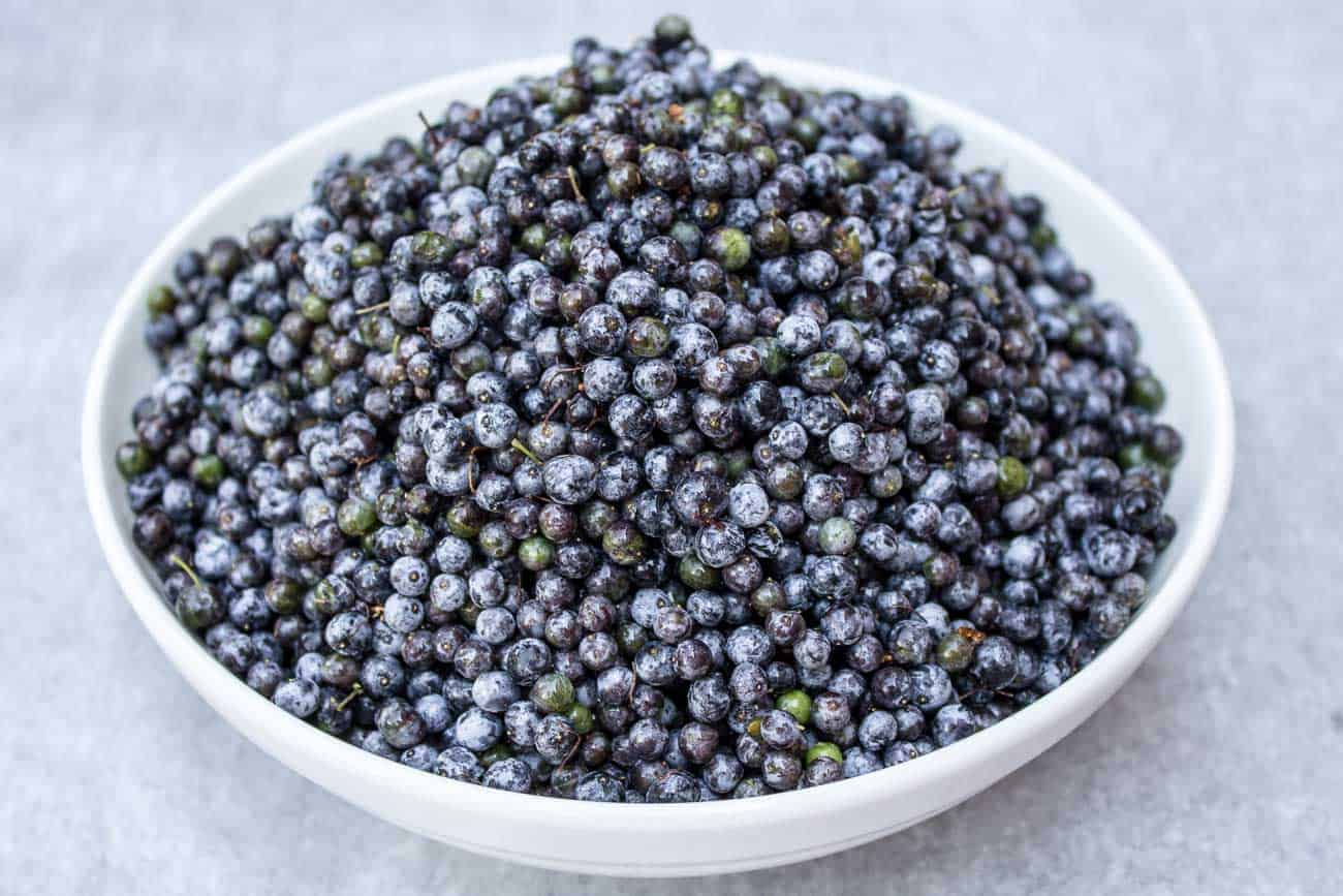 Fresh Elderberries for Elderberry Vodka