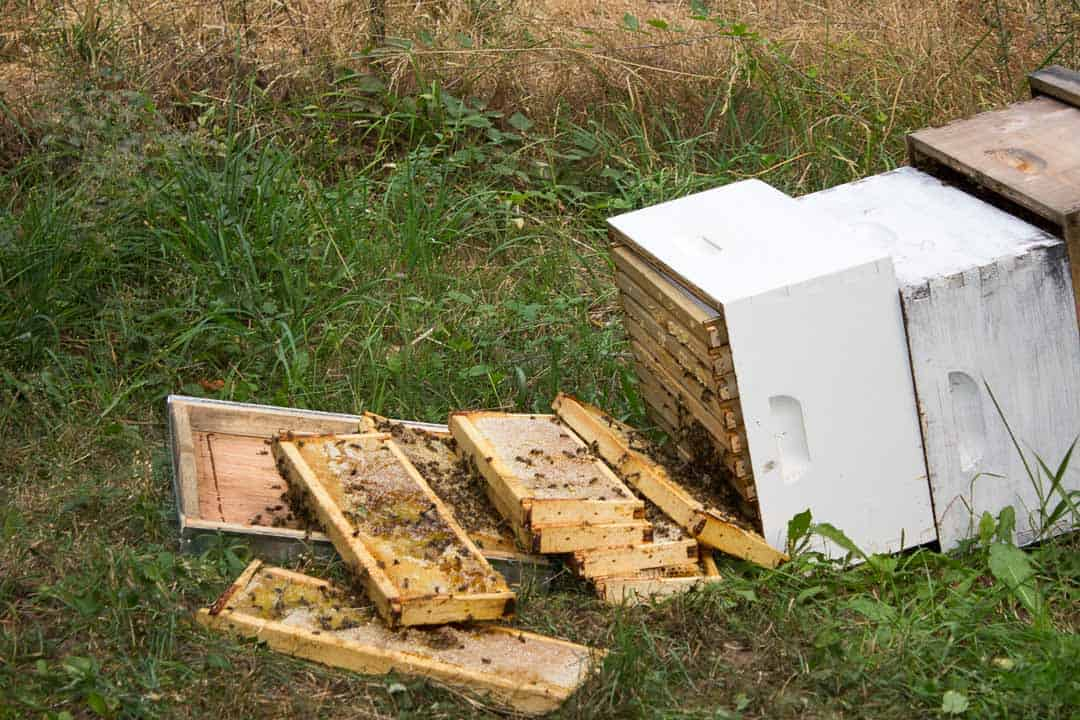 Bee Hive knocked over with frames strewn on the grass.