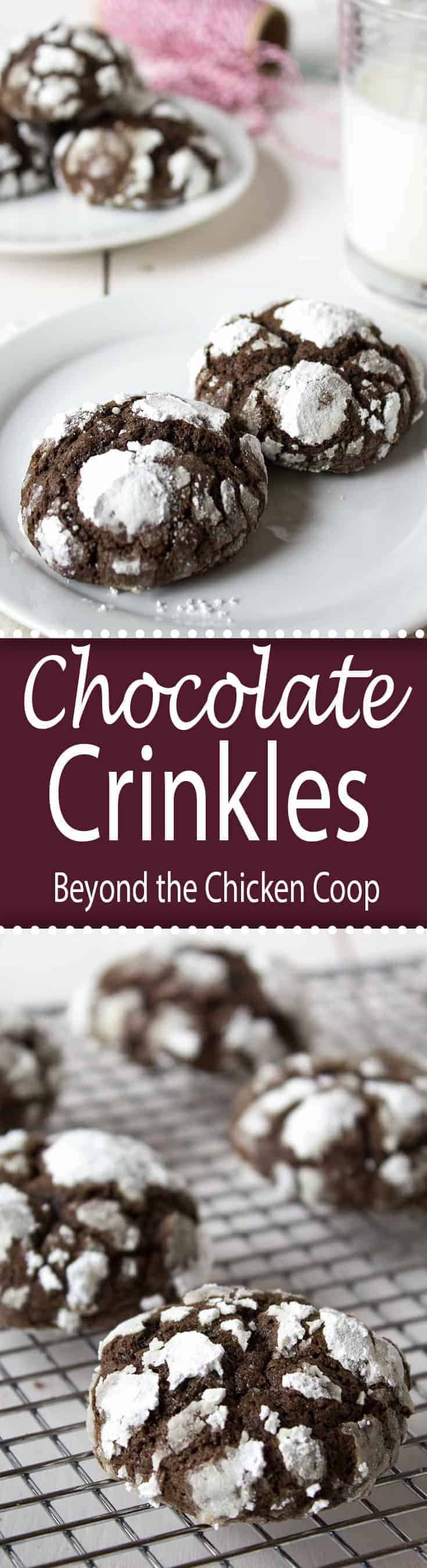 Chocolate crinkles cookie are soft on the inside and crackly on the outside!
