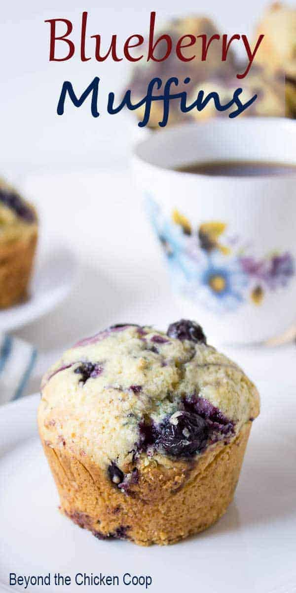 A single blueberry muffin on a plate.