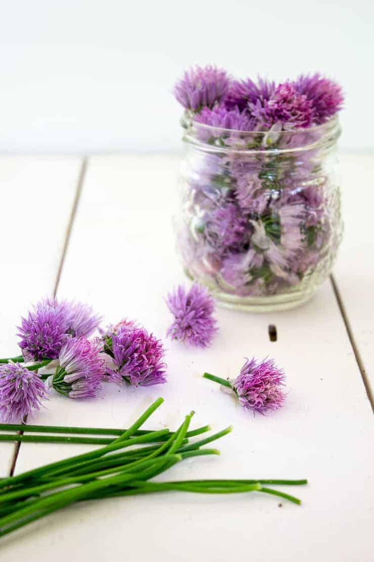 Fresh chive blossoms put in a small jar.