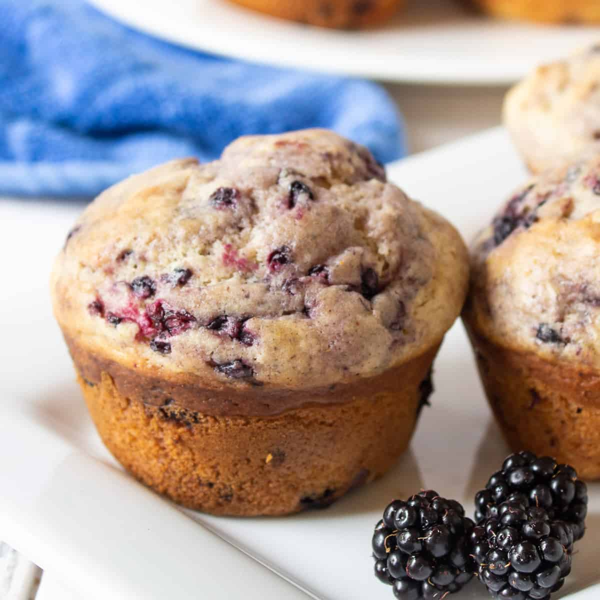 Blackberry muffins on a plate with fresh blackberries.