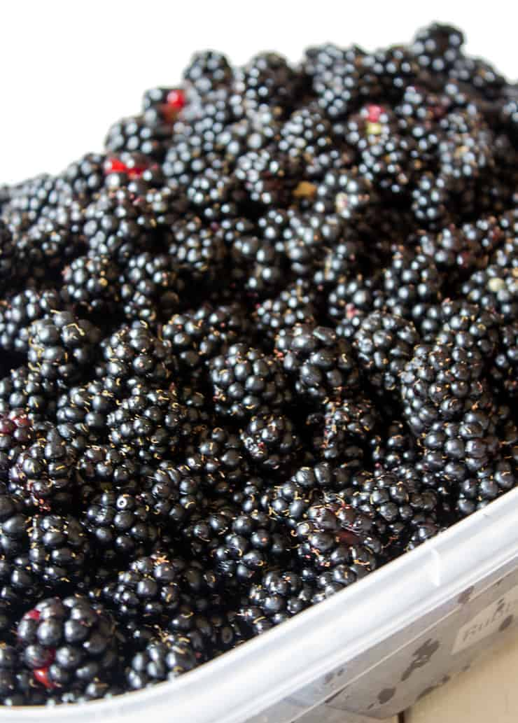 Freshly picked wild blackberries for seedless blackberry jam