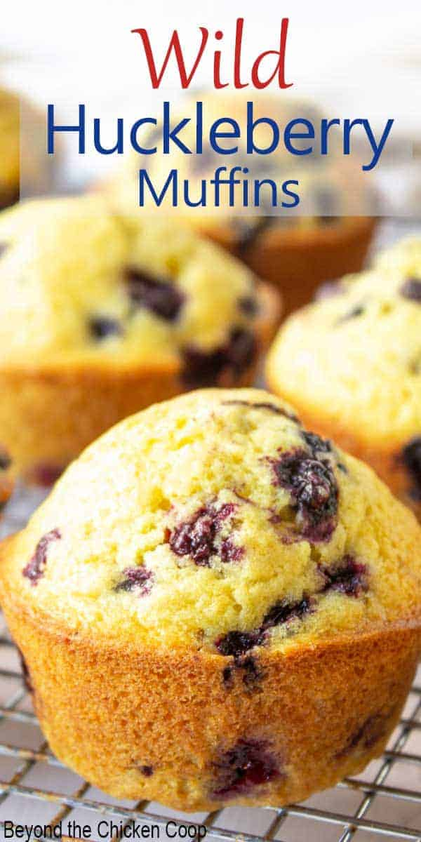 Muffins filled with wild huckleberries on a baking rack.