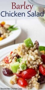 Whole grain salad with chicken and fresh vegetables.