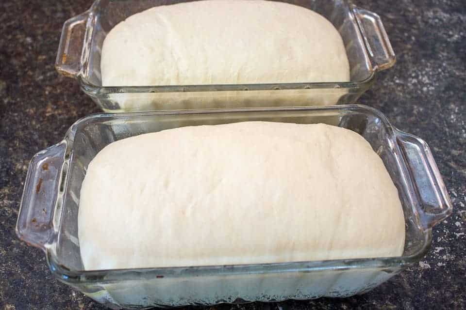 Risen loaves of bread dough in a glass loaf pan.