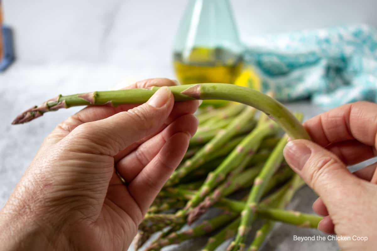 Bending a stalk of asparagus.