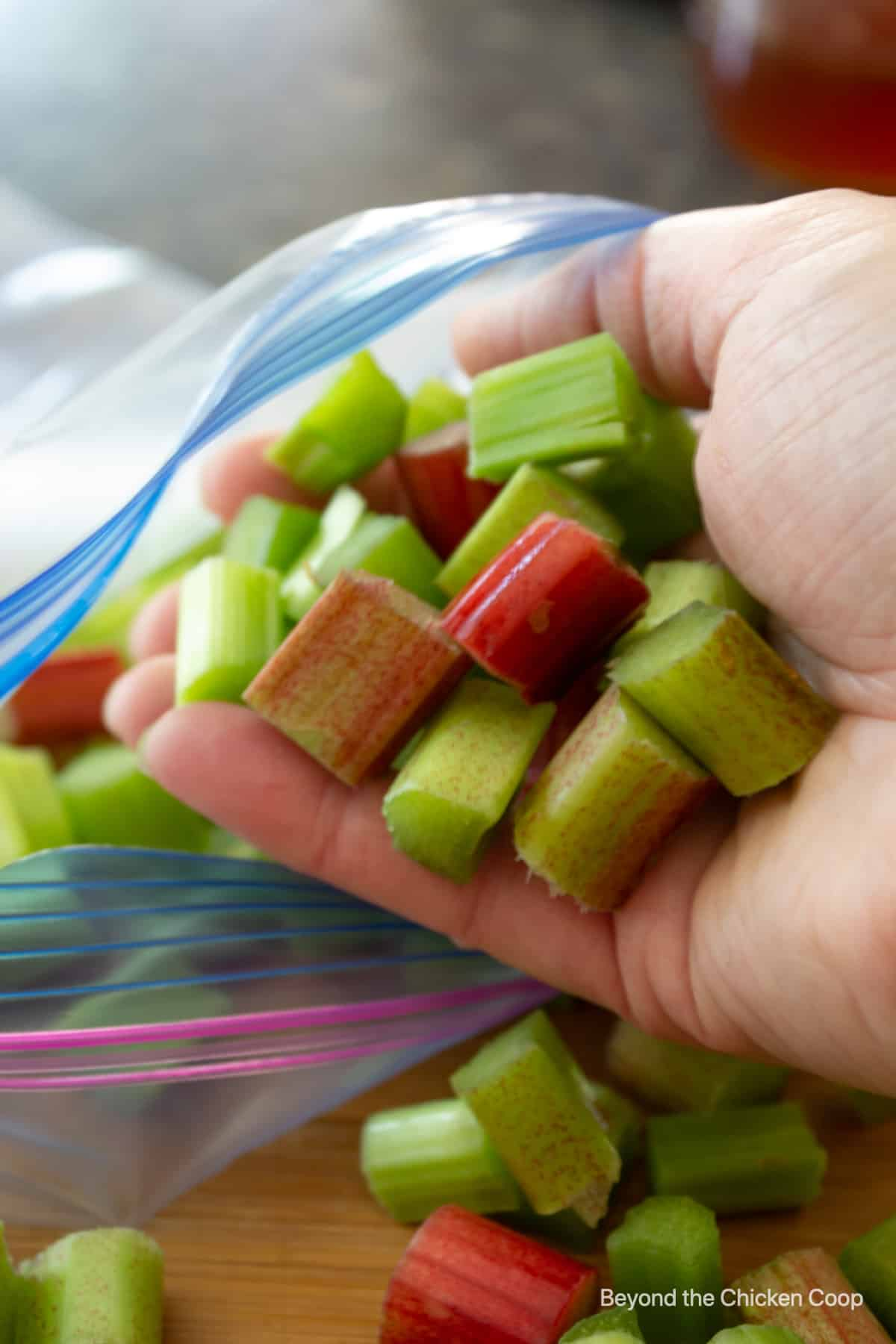 Placing a handful of cut rhubarb into a plastic bag.