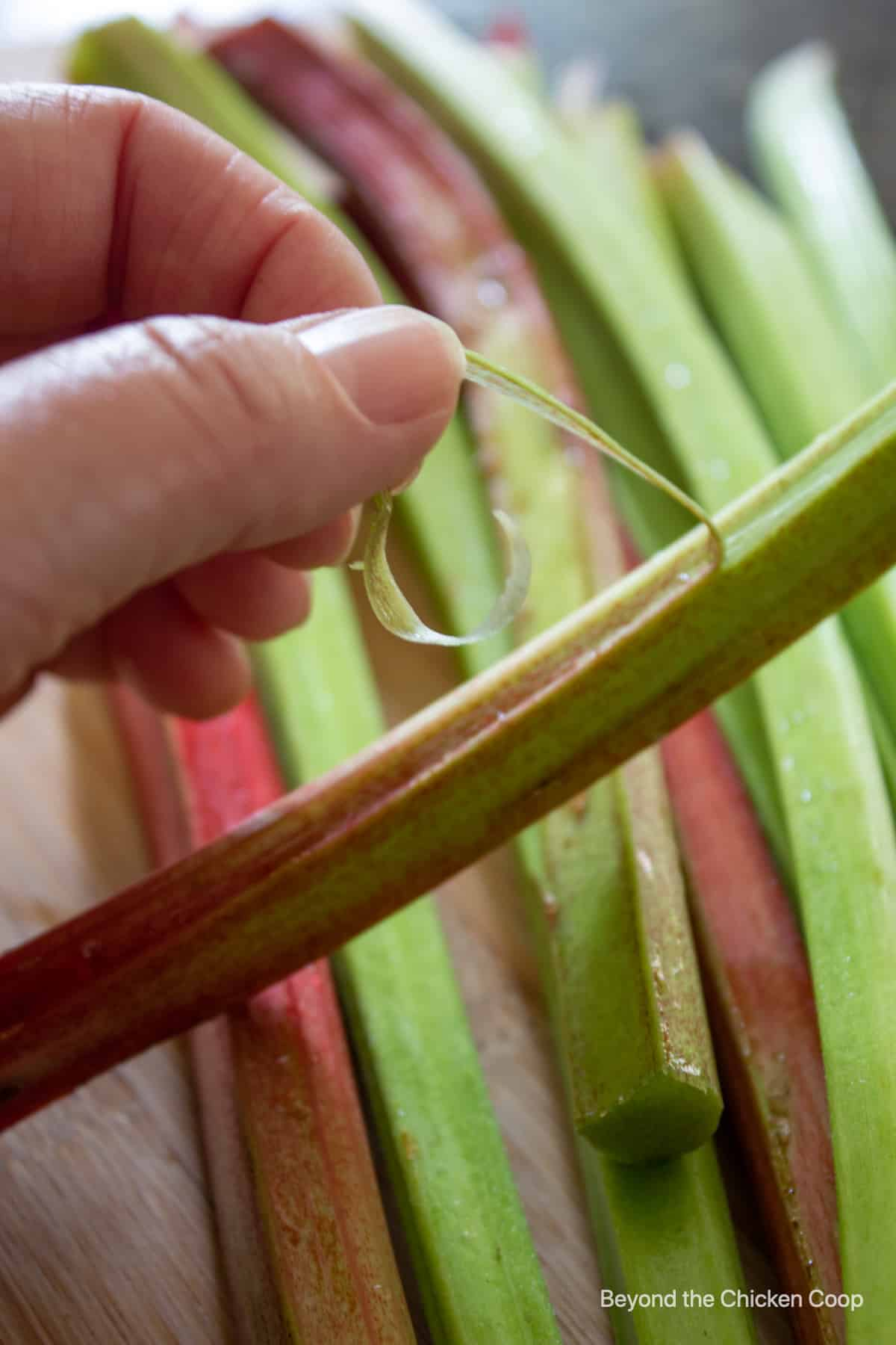 Pulling a string off a stalk of rhubarb.