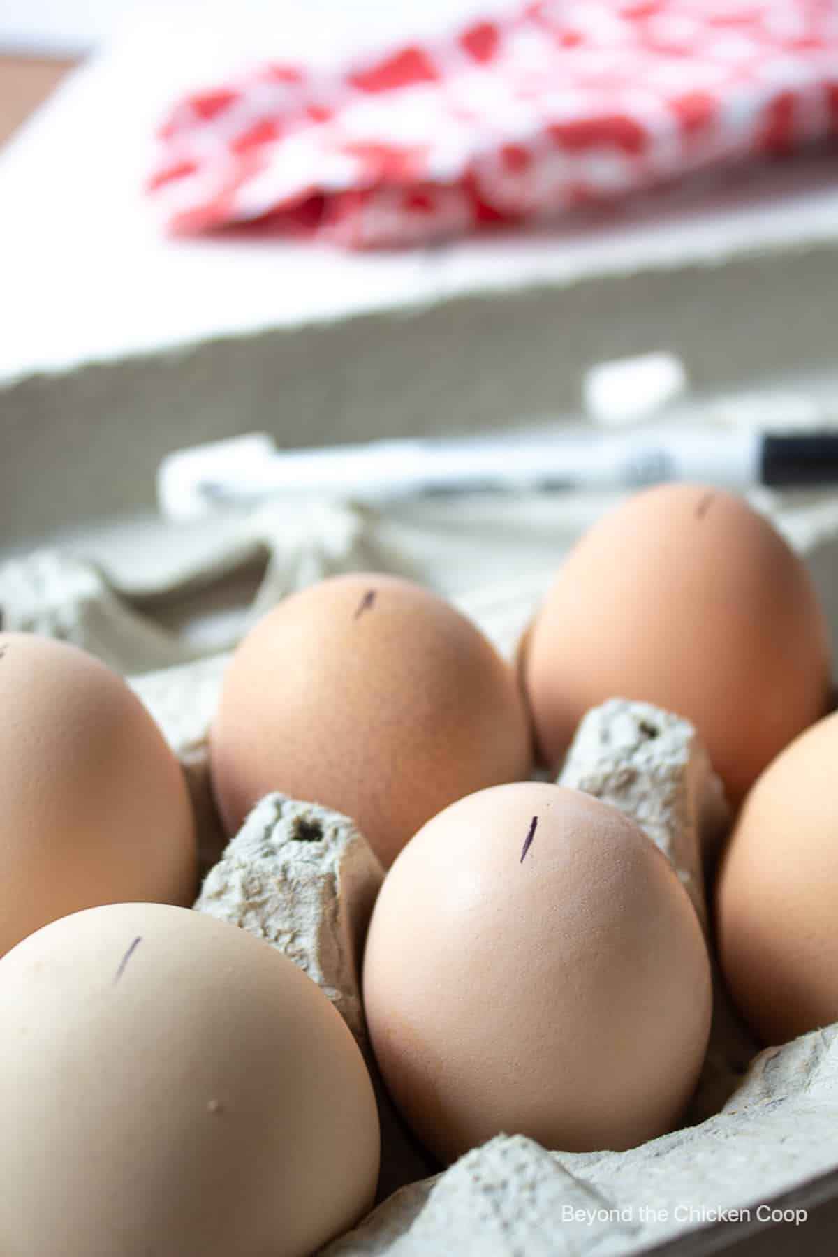 Eggs marked with a black mark in an egg carton.