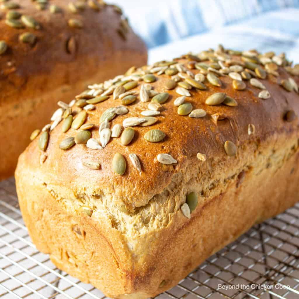 A loaf of bread topped with sunflower and pumpkin seeds.