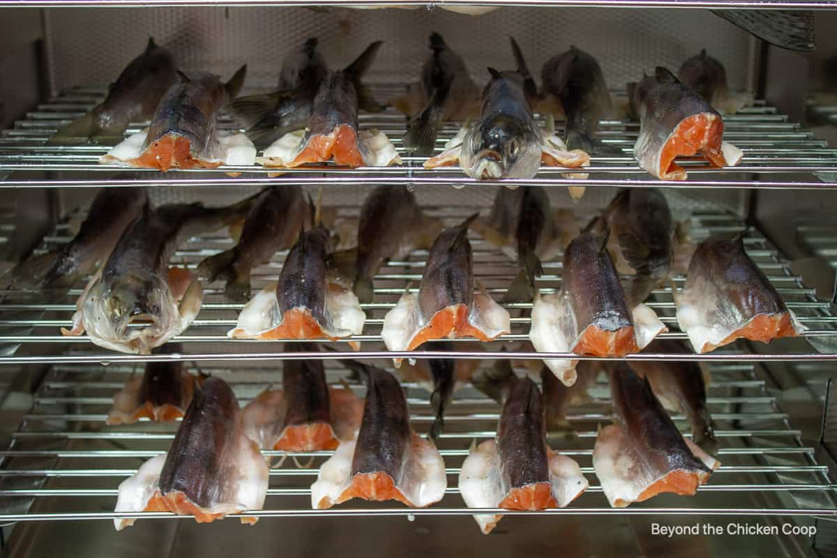 Rows of fish inside a smoker.