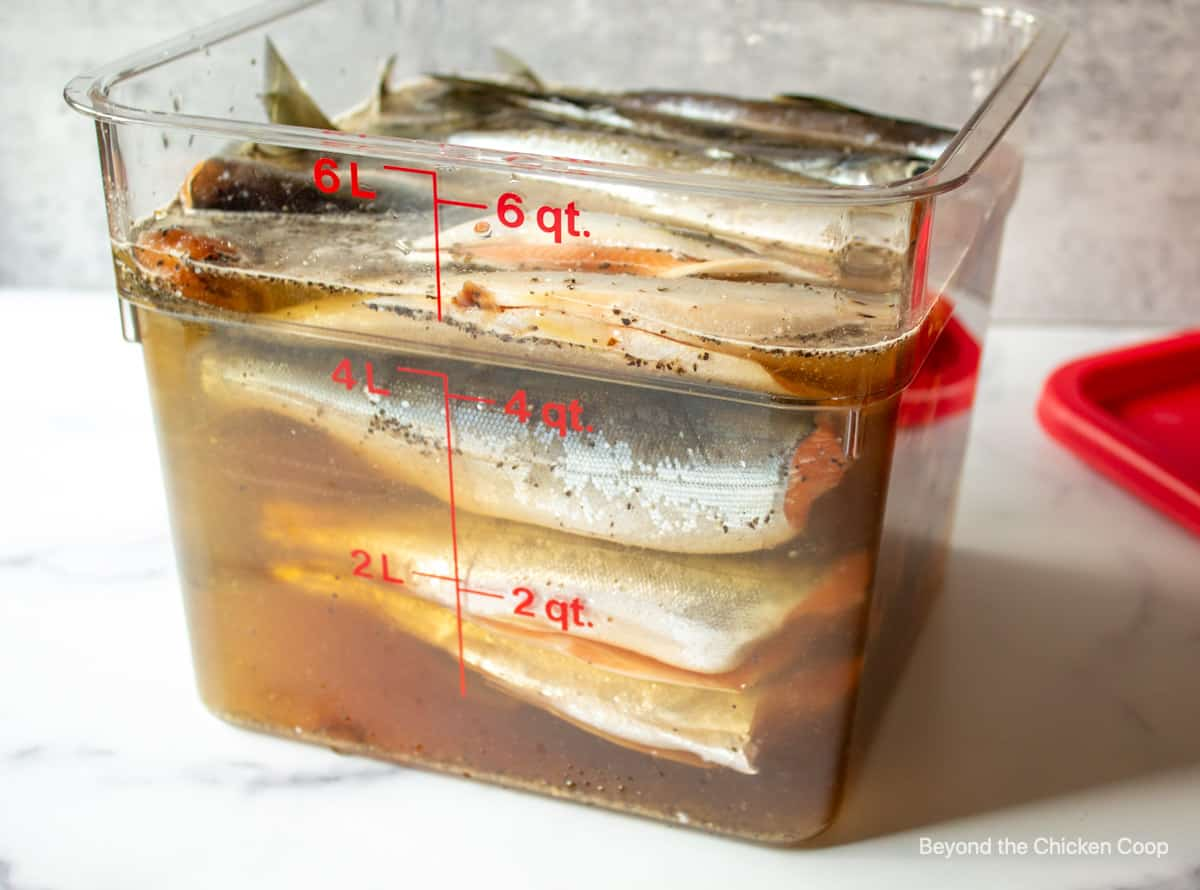 Fish in a brine in a large container.