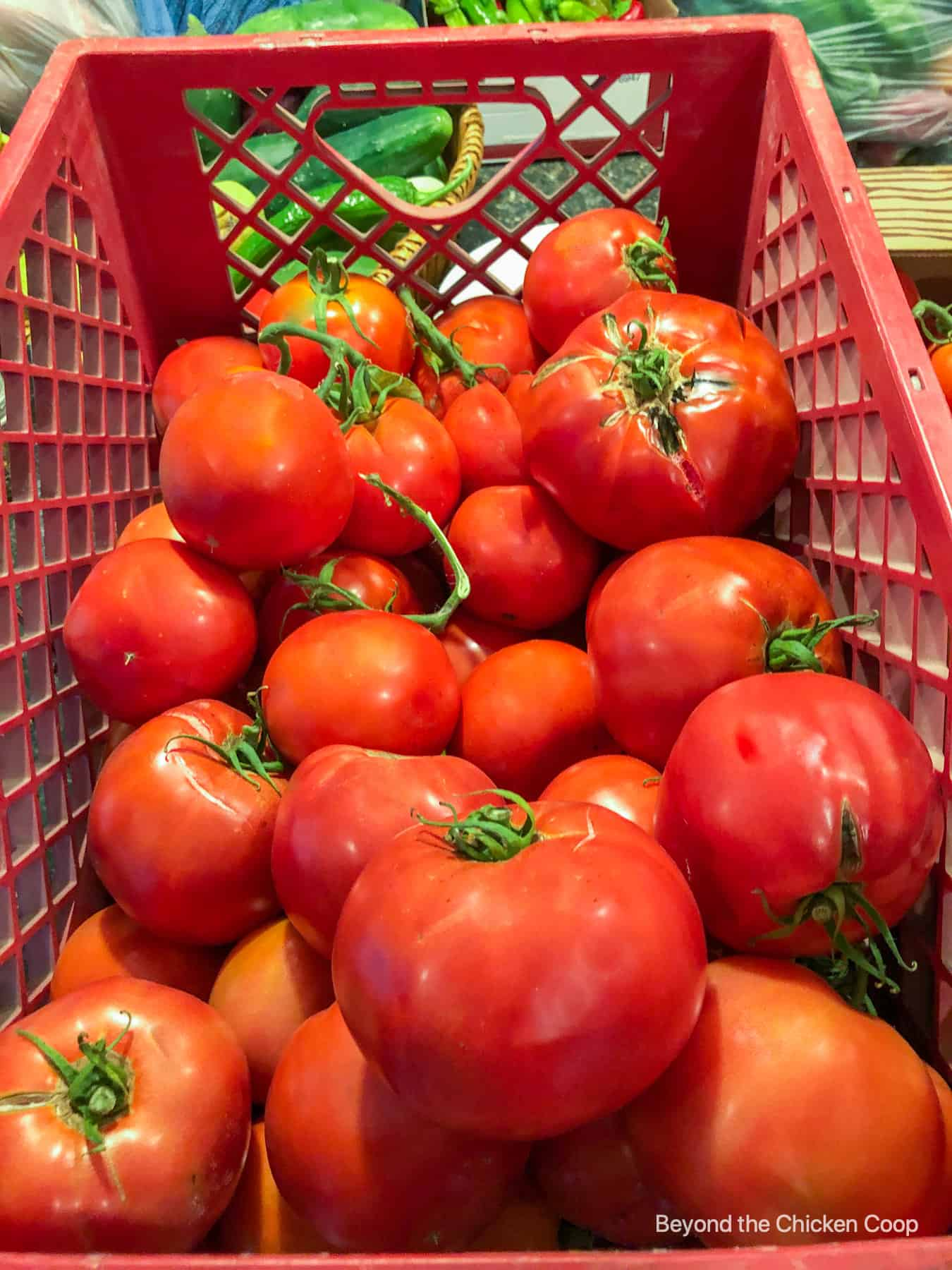 A crate full of fresh tomatoes.